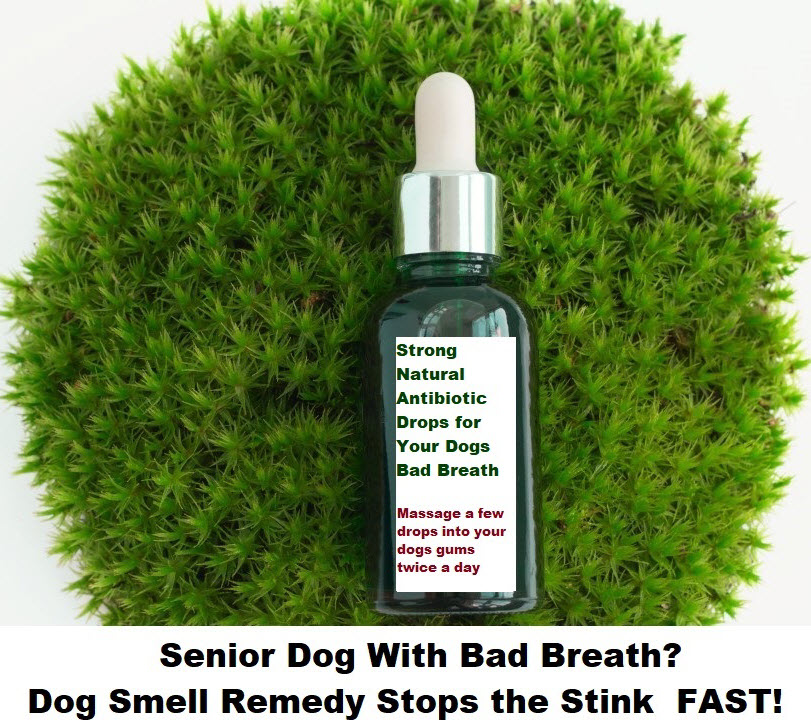Senior Dog With Bad Breath? Dog Smell Remedy Stops Infection FAST